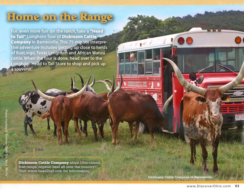 Longhorn Head To Tail Tours